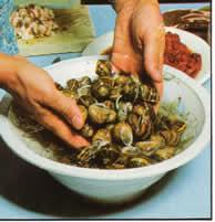 limpieza de caracoles. La preparación de los caracoles