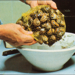 purga de caracoles
